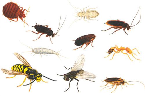 В нашем жилье обитает более сотни разных видов насекомых картинка