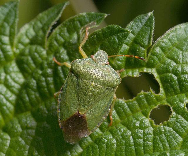 Внешний вид и строение насекомого