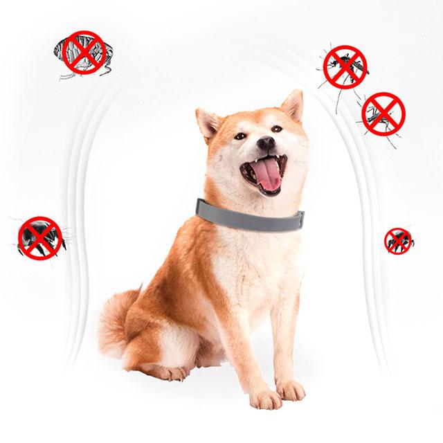 Как действует ошейник от клещей и блох для собак