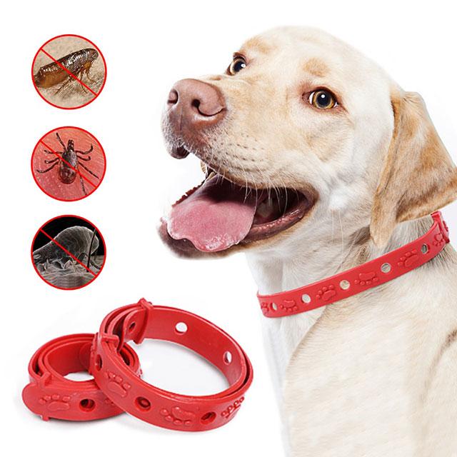 Как выбрать ошейник для собак от блох и клещей