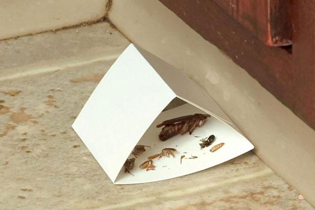 Самодельный домик-ловушка