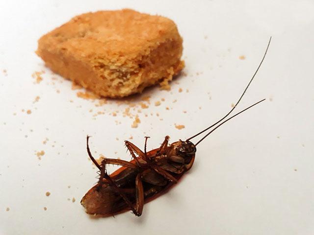 Способы избавления от тараканов народными средствами