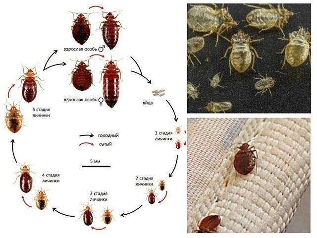 Жизнедеятельность насекомых