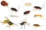 В домах обитает более сотни различных видов насекомых