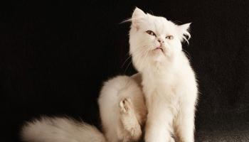 Кошачьи блохи кусают людей – могут ли и почему кусать человека, что делать при укусе