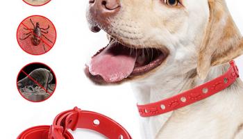 Ошейник для собак от блох и клещей – рейтинг лучших, какие разновидности и как выбрать